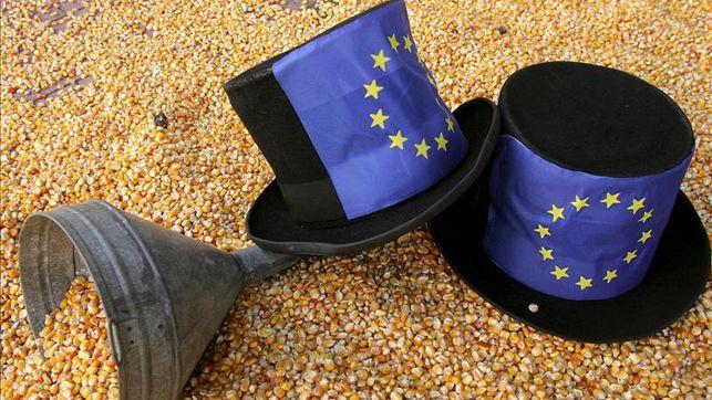 Comisión europea aproba millo transxénico sen consenso co PE