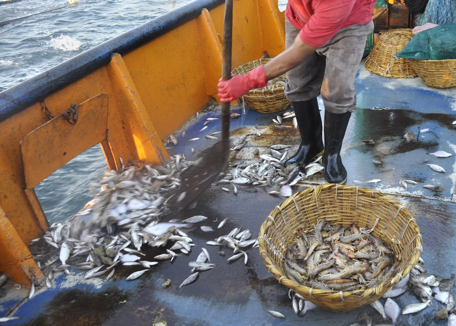 descartes-pesca-gamba-sonora-mexico
