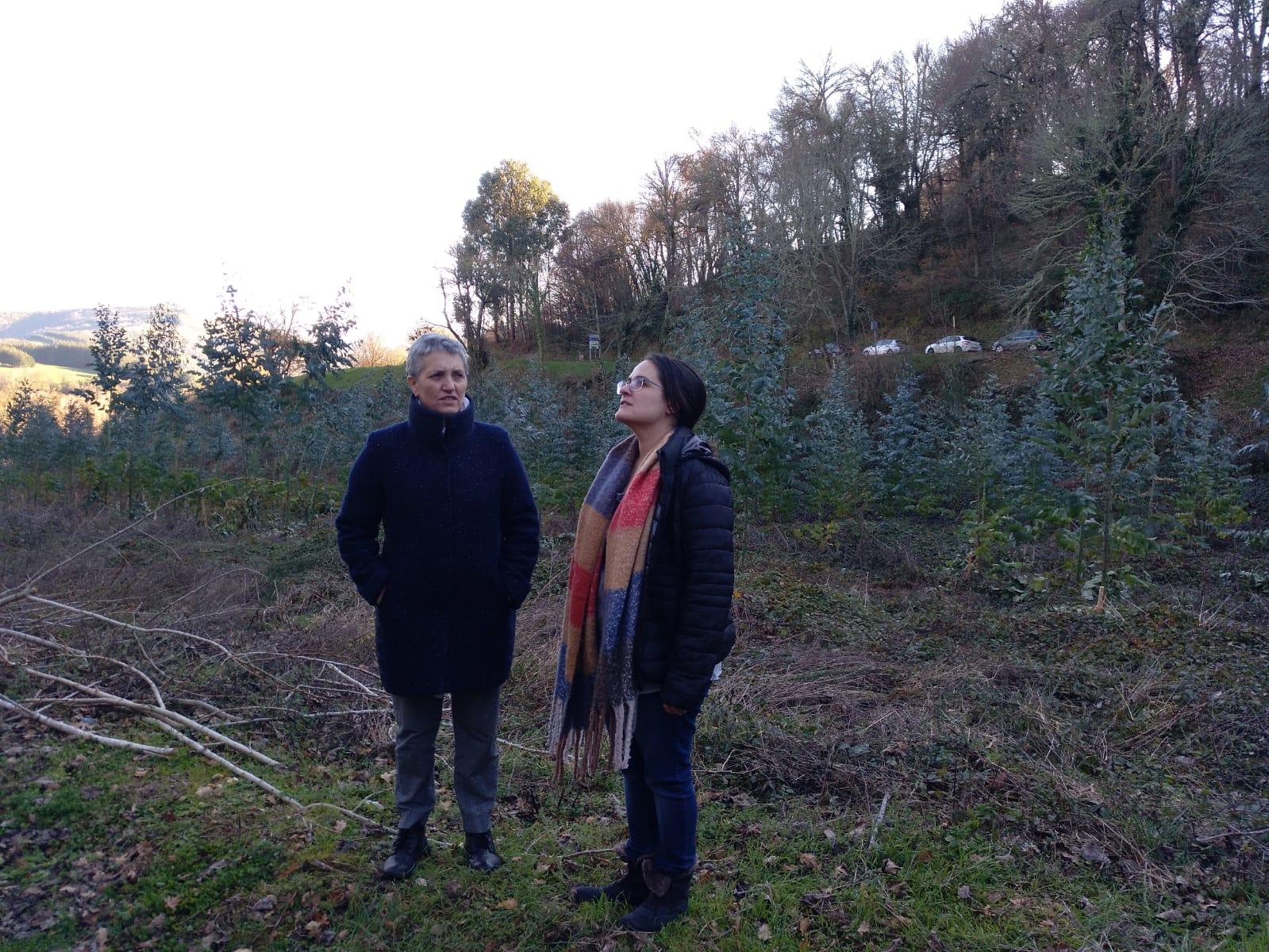 Visita a Becerrea en zona plantada de eucaliptos