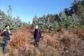 Visita a Pobra do Brollon, eucaliptos onde antes habia carballos